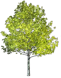 Download free tree symbol image